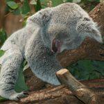 Australia: jak przygotować się do wyjazdu?